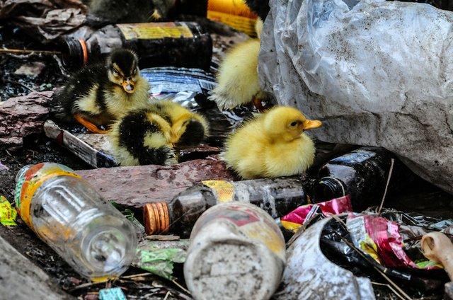PlasticsEurope condemns the illegal trade of plastic waste