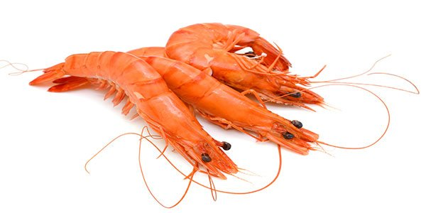 Stock shrimps