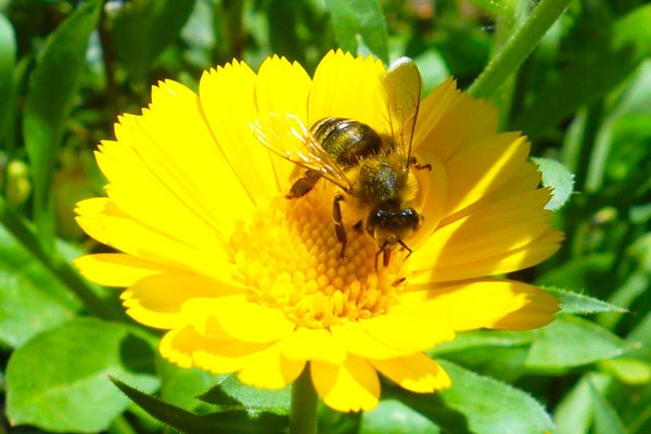 Bees make a buzz about plastic used for hives